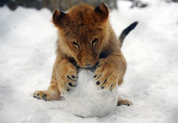 GALERIE - Zvířátka ve sněhu
