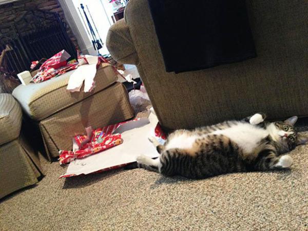 GALERIE - Zvířata ráda Vánoce