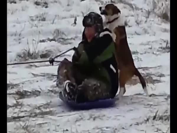 Blbci a borci na sněhu