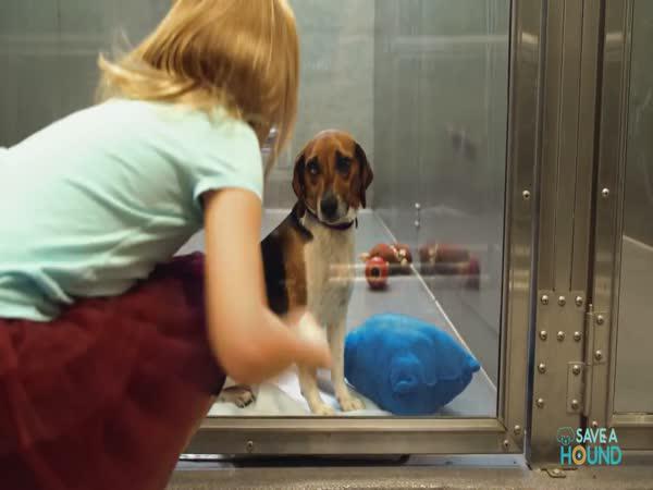Reklama - Psi z útulku