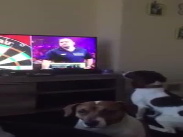 Pejsek sleduje šipky v TV