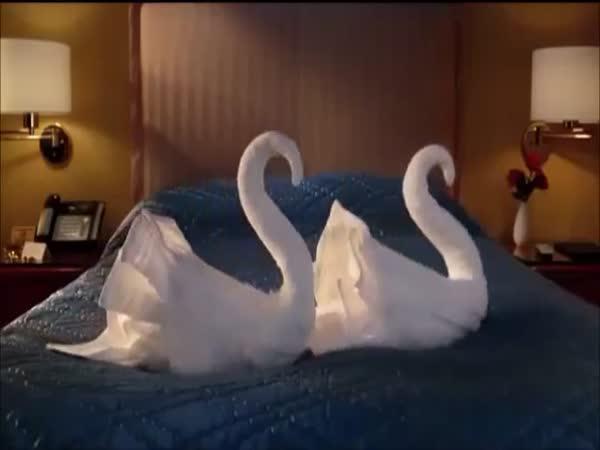 Animace - Ručníkové labutě