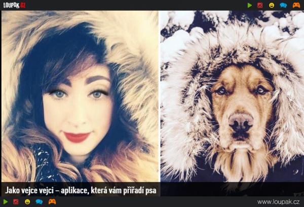 GALERIE - Psi jako lidi