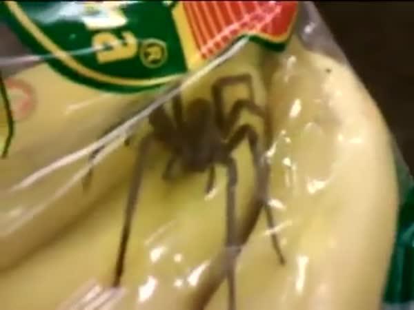 K banánům pavouk zdarma