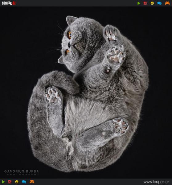 GALERIE - Kočky zespoda