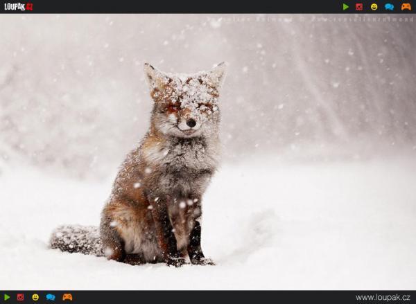 GALERIE - Divoká zvířata v zimě