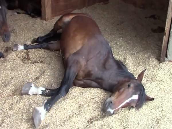 Odpočívající koně