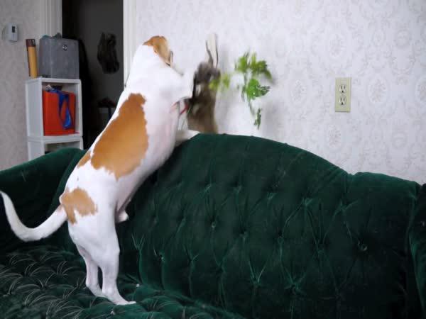 Pes versus králík: Zápas o mrkev