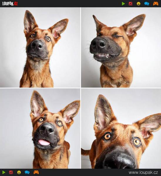 GALERIE - Psi vyfocení ve fotobudce