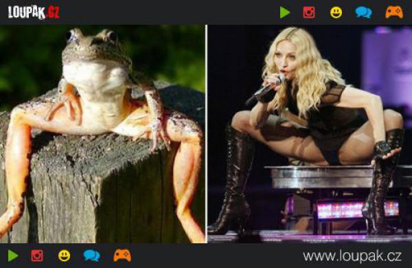 GALERIE - Celebrity a jejich zvířecí dvojníci
