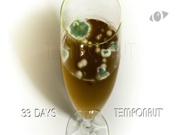 Pokus - Pivo 60 dní ve skleničce