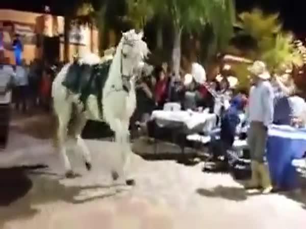 Tancující kůň