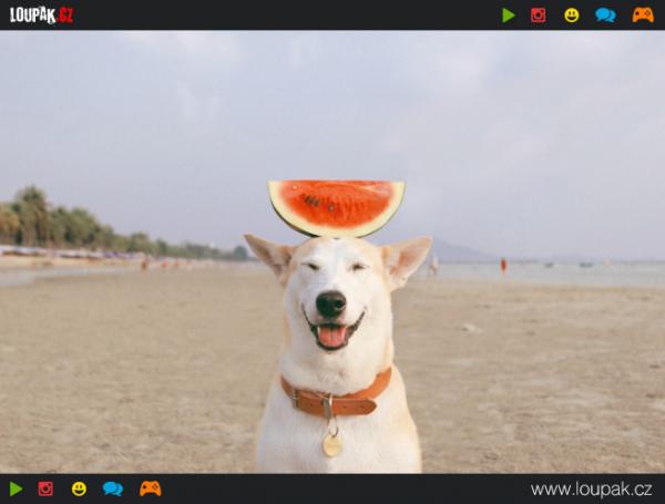 GALERIE - Nejšťastnější pes na světě