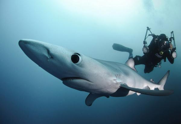 GALERIE - 12 zajímavých pohledů na žraloka