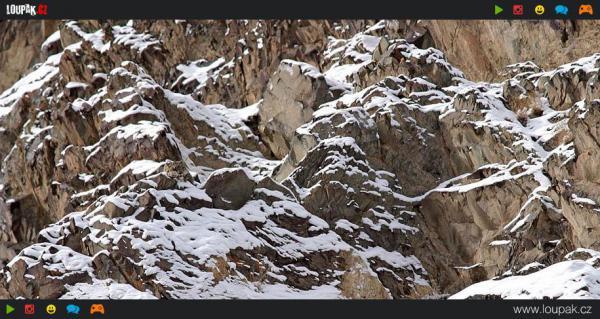 GALERIE - Najdi zvíře 2