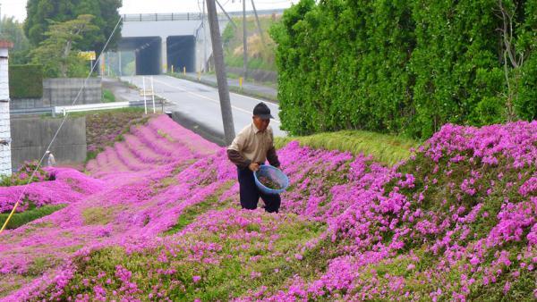 GALERIE - 2 roky sázel tisíců květů