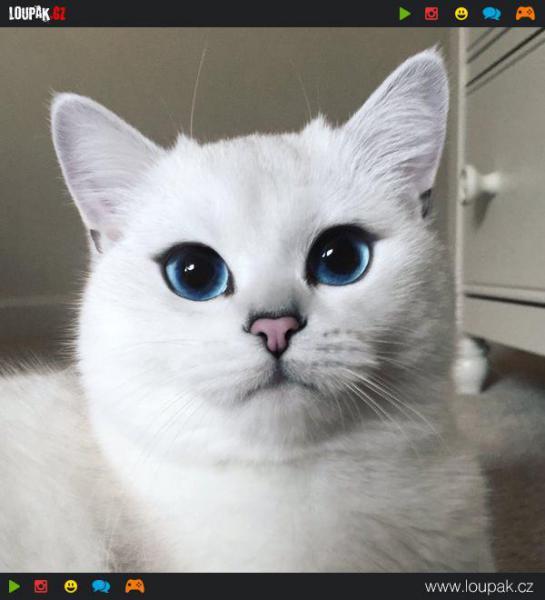 GALERIE - Kočička s nejhezčíma očima
