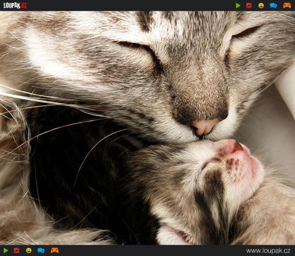 GALERIE - Zvířata co umí milovat