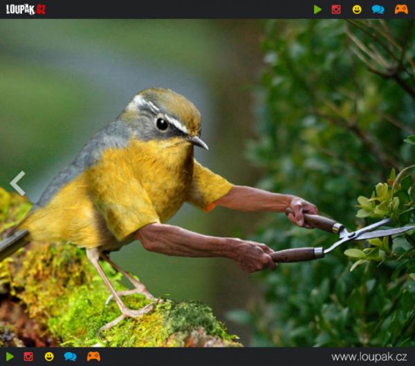 GALERIE -  Legrační ptáci s rukama