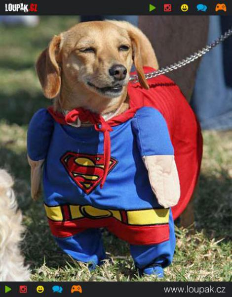 GALERIE - Nejlepší psí oblečky