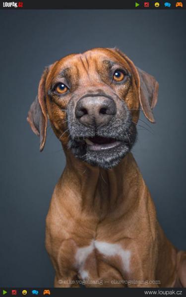 GALERIE - Úžasné psí obličeje