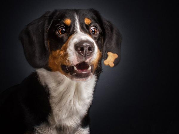 GALERIE - Psi a mňamky