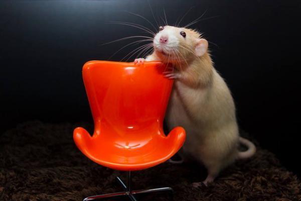 GALERIE - Rozkošné myšky