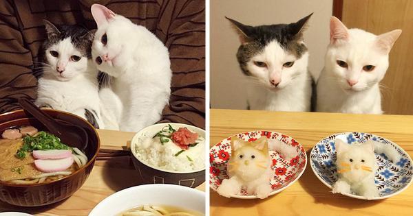 GALERIE - Kočky zírající na skvělé jídlo