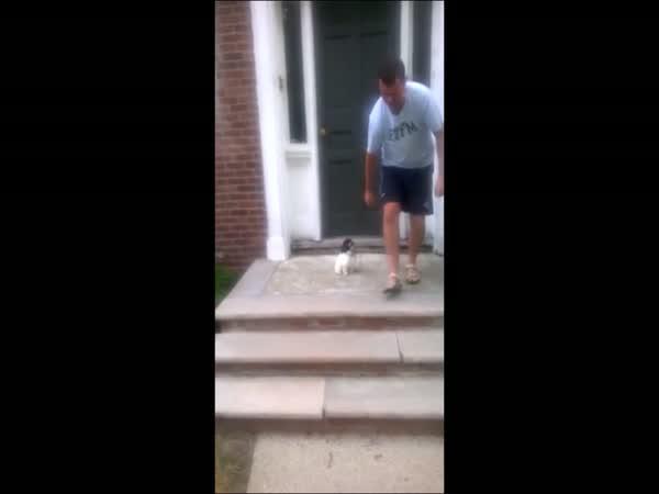 Pejsek se bojí schodů