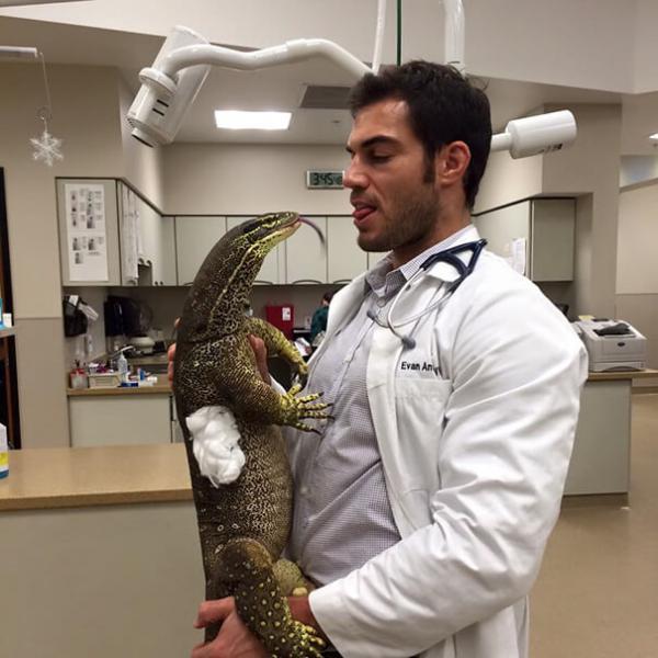 GALERIE - Výhoda práce veterináře 2