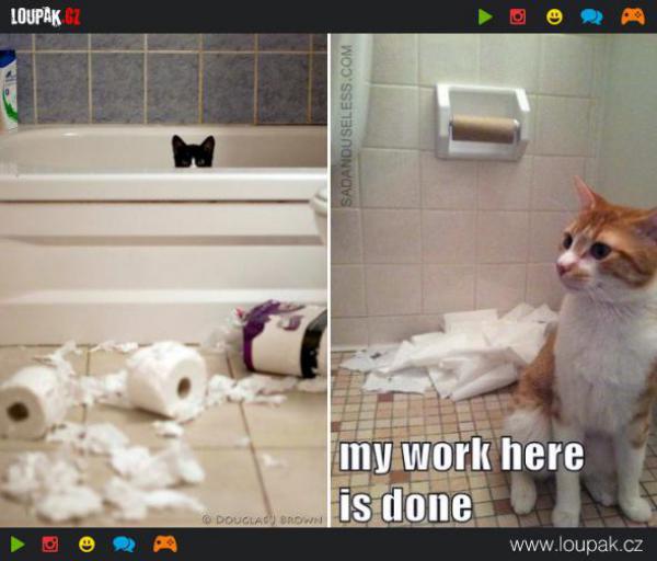 GALERIE - Kočky vs toaletní papír