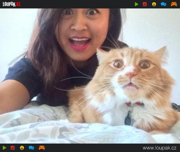 GALERIE - Kočky, co nesnáší selfie