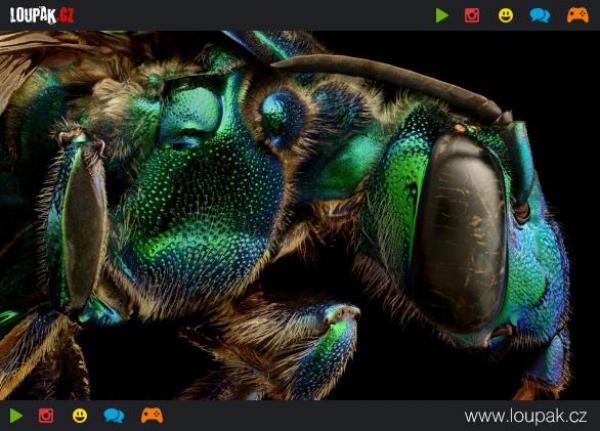 GALERIE - Detailní fotky hmyzu