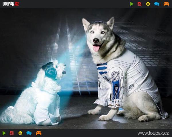 GALERIE - Star Wars pejsci
