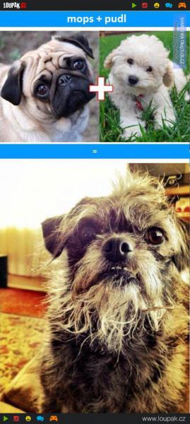GALERIE - Nejhorší psí kříženci
