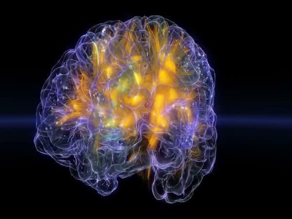 Tajemství lidského mozku odhaleno