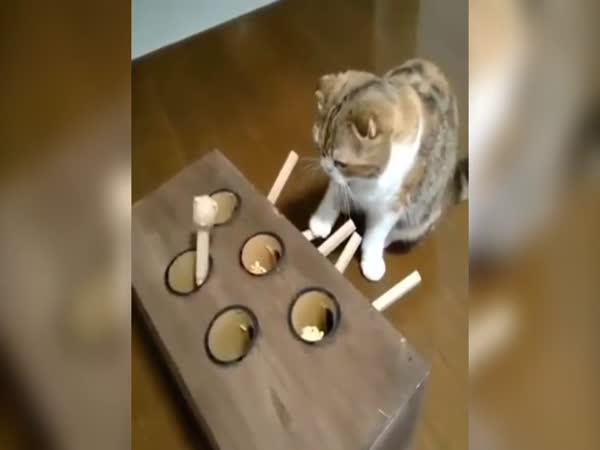 Kočka a hlavolam
