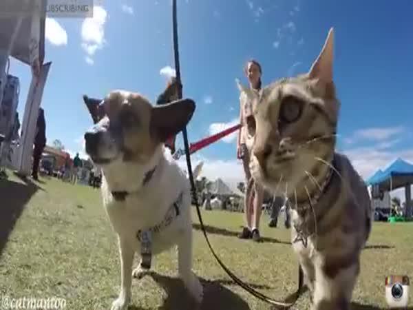 Kočka středem pozornosti