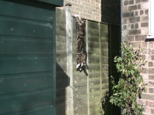 Stokrát zpomalený kočičí skok