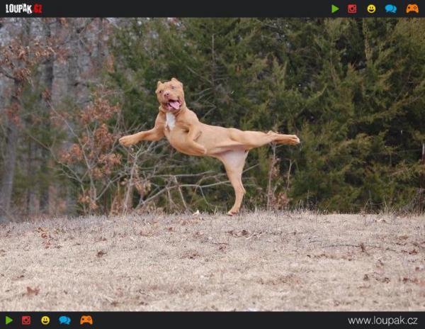 GALERIE - Legrační momentky psů 1
