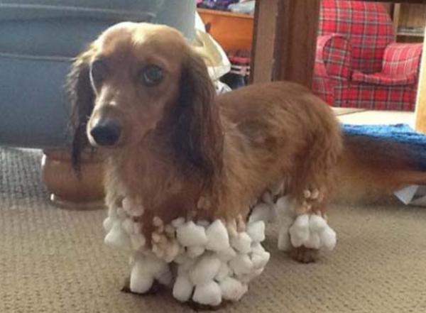 GALERIE - Jak mazlíčky překvapil první sníh?