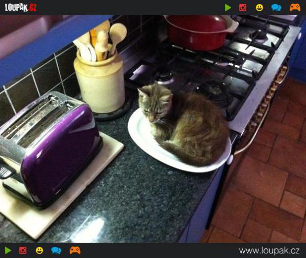 GALERIE - Kočičí ignorace vůči hračkám 1