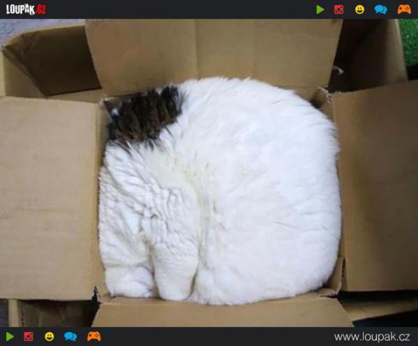 GALERIE - Nejlínější kočky