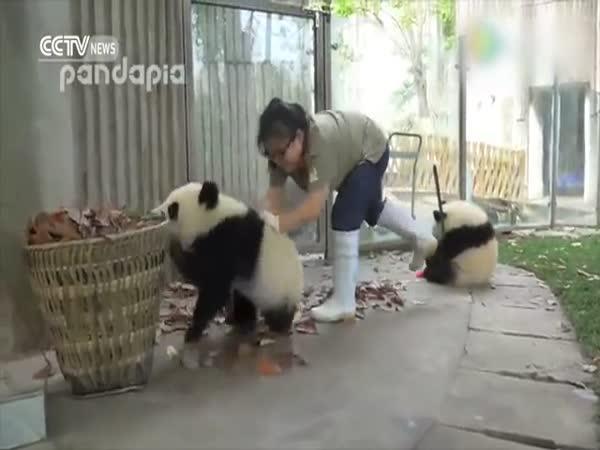 Nepořádné pandy