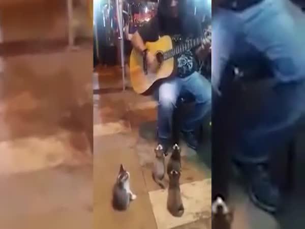 Koťátka milující hudbu