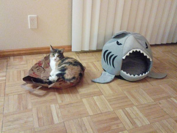 GALERIE - Kočičí ignorace hraček 2