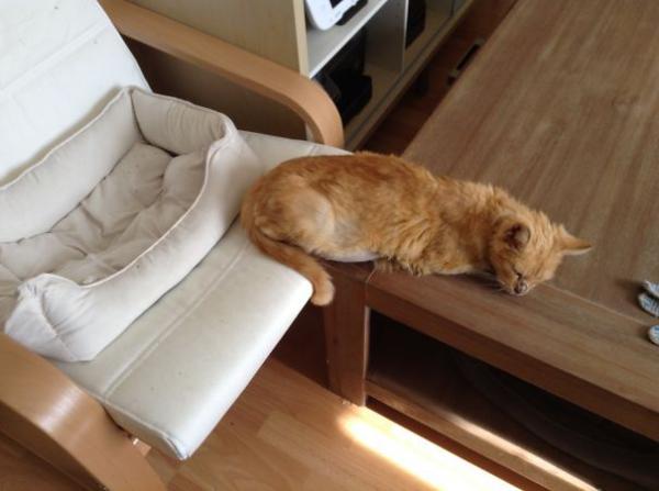 GALERIE - Kočičí ignorace hraček 3