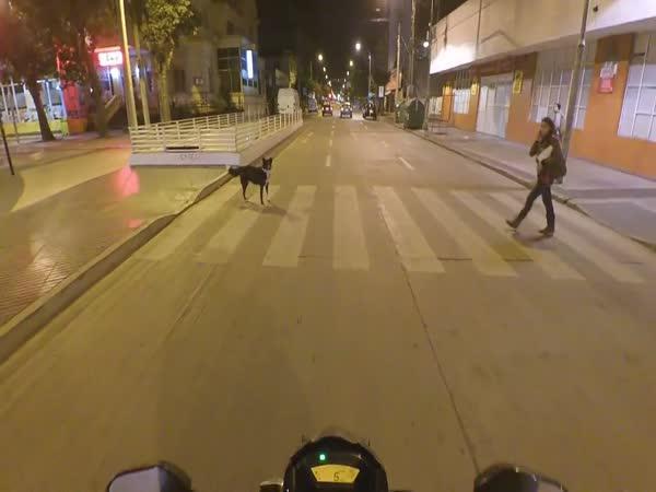 Skutečně civilizovaný pes