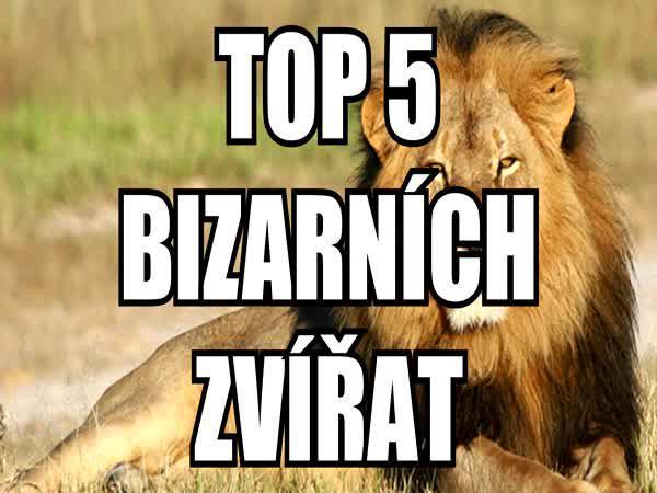 TOP 5 - Bizarní zvířata