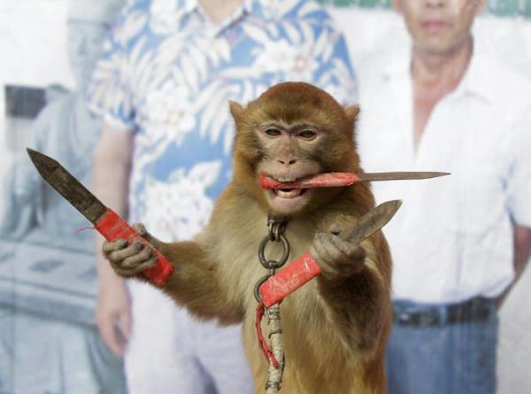 GALERIE - Ozbrojená opice a photoshop